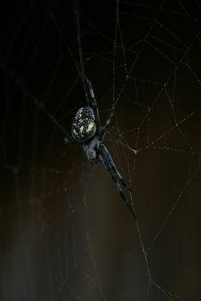 Free Spider Stock Photography - 1432772