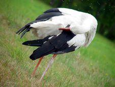 Free Stork Royalty Free Stock Image - 1434176