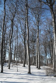 Free Winter Forest Stock Photos - 1434213