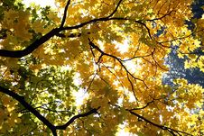 Free Gold Autumn Stock Photos - 1435243