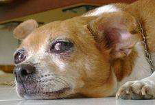 Free Dog Stock Photo - 1435800