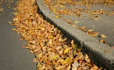 Free Yellow Leaves Stock Photography - 1438542