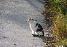 Free Cat Sunbathing Royalty Free Stock Photos - 1439308