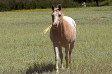 Free Horse In A Field Royalty Free Stock Images - 1439359