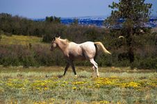 Free Horse In A Field Of Flowers Stock Photography - 1439362