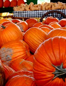Free Pumpkin Farm Royalty Free Stock Photo - 1439485