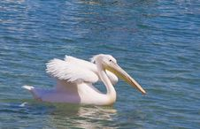 Free White Pelican Floating On The Blue Sea Stock Images - 14300004