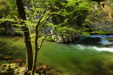 Free Stream In The Mountains In Spring Royalty Free Stock Images - 14301149
