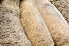 Patagonia, Sheep Ranches Royalty Free Stock Image