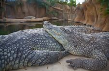 Free Crocodil Stock Photography - 14301402