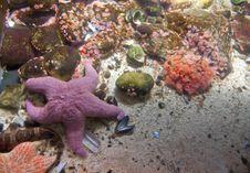 Free Sea Bottom Royalty Free Stock Photography - 14301597