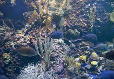 Free Sea Bottom Royalty Free Stock Photos - 14301648