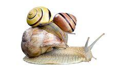 Free Snail Stock Photos - 14301733