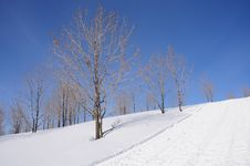 Free Winter Trees Royalty Free Stock Image - 14302276