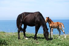 A Mare And A Foal Stock Photo