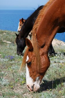 Free Horses Eating Grass Royalty Free Stock Images - 14303209