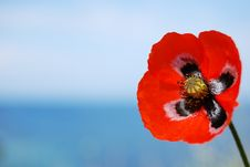 Free Red Poppy On Blue Stock Photos - 14303253