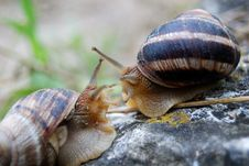 Free Snails In Love Royalty Free Stock Photo - 14303455