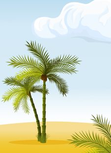 Free Two Palm-tree Stock Image - 14303501