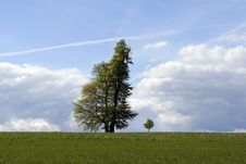 Free Two Trees Royalty Free Stock Photography - 14304807