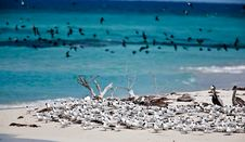 Free Terns And Pelicans Stock Photo - 14306160