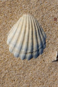 Free Empty Shell On Sand Stock Images - 14306834