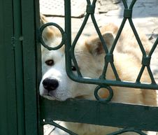 Free Dog Behind Bars Stock Photo - 14306840