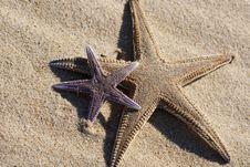 Starfish On The Sand Stock Image