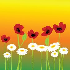 Poppies And Chamomiles Royalty Free Stock Photo