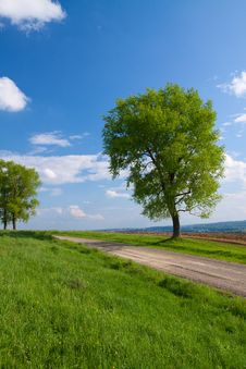Free Tree And Blue Sky Stock Images - 14308034