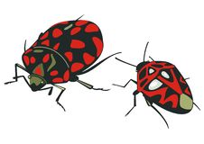 Free Beetle Insect Red Black Stock Photos - 14309673