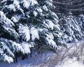 Free Rime Orfrost Royalty Free Stock Photography - 14314357