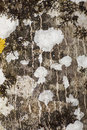 Free Dry Moss And Lichen Stock Photography - 14315482