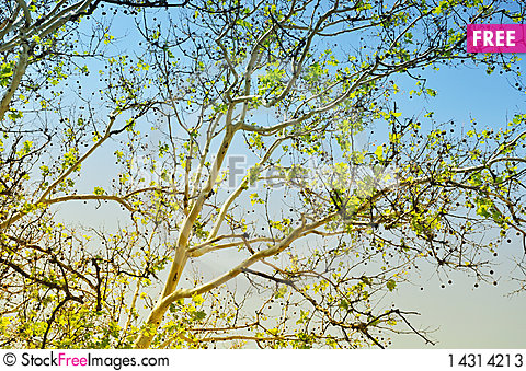 Free Tree Branches In The Sky Stock Photos - 14314213