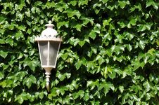 Free Lamp Royalty Free Stock Image - 14310346