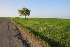 Free Lonely Blooming Tree At The Edge Of The Road. Stock Photography - 14310502
