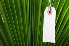 Free Branch Palm Stock Photos - 14310573