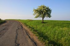 Free Lonely Tree At The Edge Of The Road. Royalty Free Stock Photo - 14310675