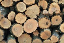 Free Fire Wood Royalty Free Stock Photography - 14310717