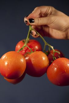 Free Holding Red Tomatoes Stock Photo - 14310750