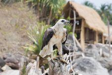 Free Bird Of Prey Stock Image - 14311281