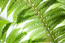 Free Fern Plant Royalty Free Stock Images - 14312079