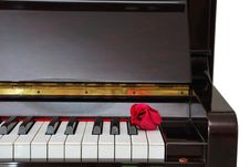 Single Red Rose On Piano Royalty Free Stock Photography