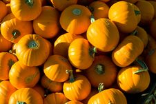 Free Pumpkin Patch Stock Photography - 14312162