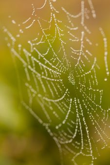 Free Wet Spider Web In The Morning Mist Royalty Free Stock Images - 14312309