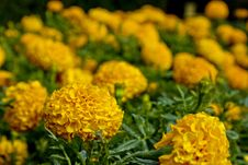 Free Flowers Stock Image - 14312761