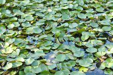 Free Tree Water Royalty Free Stock Photos - 14313348