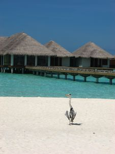 Free Water Bungalow Stock Photography - 14313592