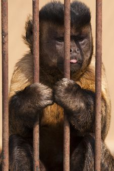Free Monkey In Cage Stock Image - 14313781