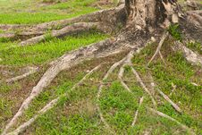 Free Tree On Yard Royalty Free Stock Photos - 14313848